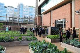 Urban Garden Houston Uthealth Of Public Health Unveils New Facilities Designed