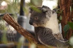bartender resume template australia mapa koala sewing chair september 2016 ramblingrazorback