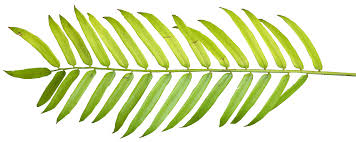 palm leaf clipart free download clip art free clip art on