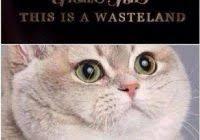 Fat Cat Heavy Breathing Meme - pretty fat cat heavy breathing meme heavy breathing cat 80