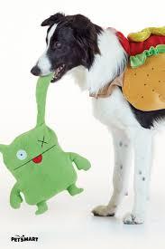 halloween dog toys 105 best monstercute halloween images on pinterest actors dog