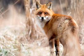 Pennsylvania wildlife images 20 stunning photographs of pennsylvania wildlife jpg