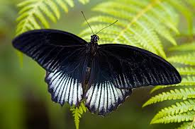 black butterfly some random thoughts