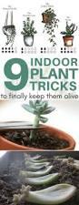 best 25 big indoor plants ideas on pinterest big plants big