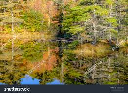 beautiful autumn colored trees reflected small stock photo