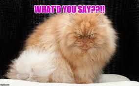 Angry Cat Meme - angry cat what d you say imgflip