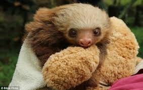 meet the sloths cuter than your average reality tv daily