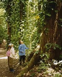 best but black friday amazon forest peru u0027s amazon rainforest t l family travel leisure