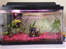 Petsmart Christmas Aquarium Decorations by Show Me Your Betta Tank 263623