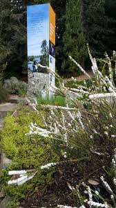 native tasmanian plants royal tasmanian botanical gardens