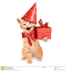 smiling cat kitten happy birthday isolated stock photo image