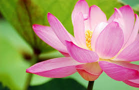 blooming flowers flowers and positive thinking should start blooming now