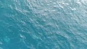 watch the stunning aerial video of pod of dolphins frolicking