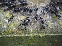 ant free pictures pixabay