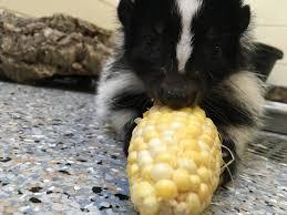 turnip too stinkin u0027 cute keeper blog john ball zoo