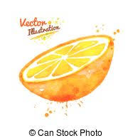 vectors illustration of sketch of an orange the abstract of