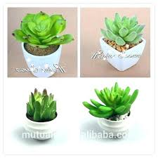 Small Desk Plants Plants For Office Desk Houseplant On Cubicle Medium Size Of