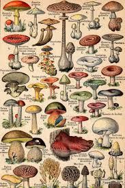 Are Backyard Mushrooms Poisonous French Color Chart 1930 Edible And Poisonous Mushrooms Nouveau