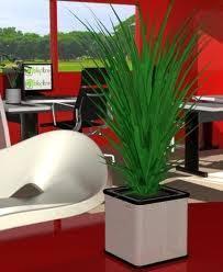 plante pour cuisine cuisine style plantes d interieur