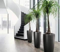 Tropical Potted Plants Outdoor - 20 unforgettable indoor plant displays u0026 ideas