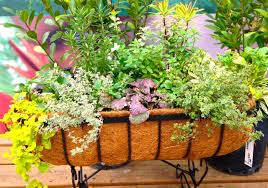 food cary gardening edible ornamentals to plant now
