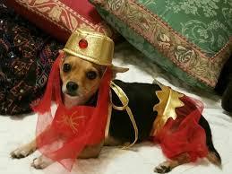 Harem Halloween Costume Harem Dog Halloween Costume Shipping Baxterboo