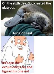 Platypus Meme - platypus the most amusing animal animals pinterest