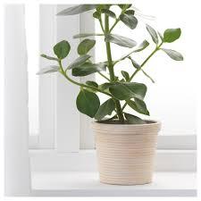 pekannöt plant pot rattan 12 cm ikea