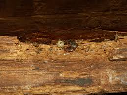Fleas And Hardwood Floors - photos of bed bugs in a wooden bed frame head board and box spring