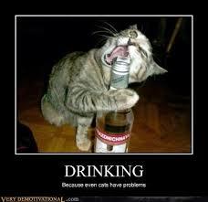 Drunk Cat Meme - elegant drunk cat meme 10 crazy cats with booze memes