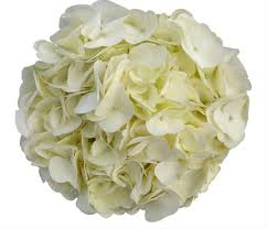 white hydrangea white hydrangea flowers and fillers flowers by