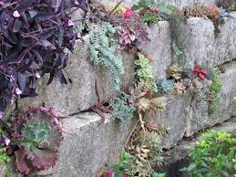 44 best rock walls and plants images on pinterest gardens