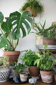 Interior Garden Plants by 1584 Best Indoor Planters Pots Images On Pinterest Plants