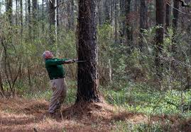 South Carolina forest images S c forestry industry has plenty of room for growth clemson jpg