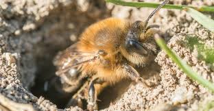 Bee Deterrent For Patio 3 Surefire Ways To Get Rid Of Ground Bees Fast Plus 9 Must Know