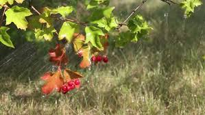 Autumn Tree Decorations Christmas Tree Decorations Closeup And Blur Stock Footage