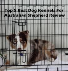 4 corners australian shepherd club 5 best dog kennels and cages for australian shepherd in 2017 review