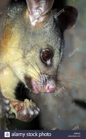 possum in backyard home decorating ideas