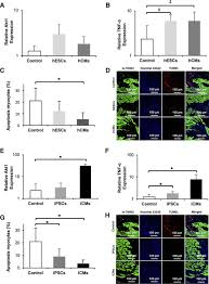 paracrine effects of the pluripotent stem cell derived cardiac