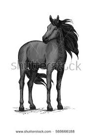 Black Horse Mustang Black Wild Horse Racehorse Standing Stomping Stock Vector