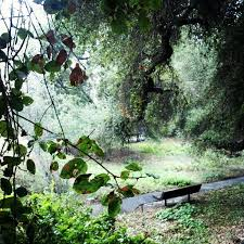 Santa Ana Botanic Garden by 25 Best My Home Claremont Home Sweet Home Images On Pinterest