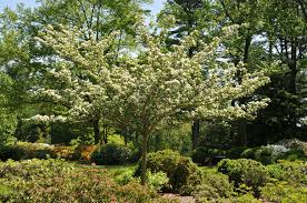 top ten trees and shrubs for wildlife
