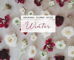 Wedding Flowers Guide Seasonal Flower Guide Winter Weddbook