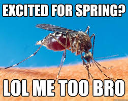 Mosquito Meme - 30 things people always ask when you re from vermont meme memes
