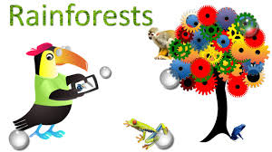 rainforest amazing facts sights and sounds science videos for