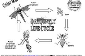 incomplete metamorphosis life cycle dragonfly life cycle coloring