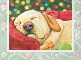 pumpernickel cards cheap dog cards find dog cards deals on line at