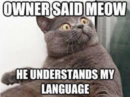 Cat Sitting Meme - fuzzball fetch cat sitting in toronto