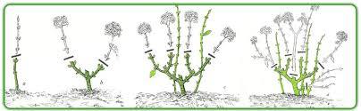 potare le ortensie in vaso creattivando in giardino non possono mancare le ortensie