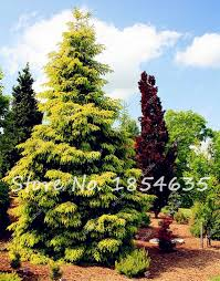 compare prices on miniature bonsai tree online shopping buy low